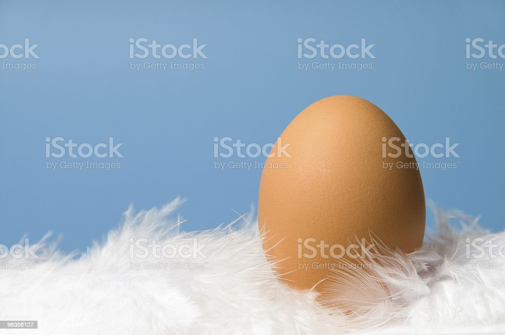 One brown egg with blue background royalty-free stock photo