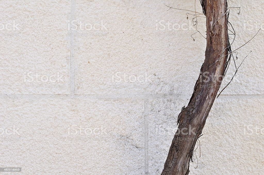 Jeden brązowy Pień drzewa na Biały Dom ściany zbiór zdjęć royalty-free
