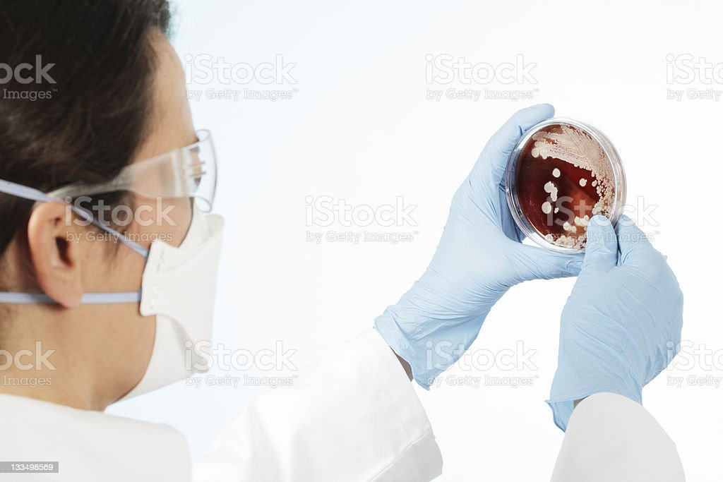 One chemist holding a petri plate culture. royalty-free stock photo