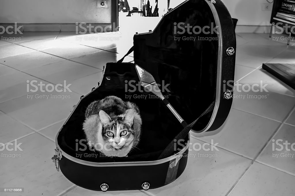 One cool cat stock photo