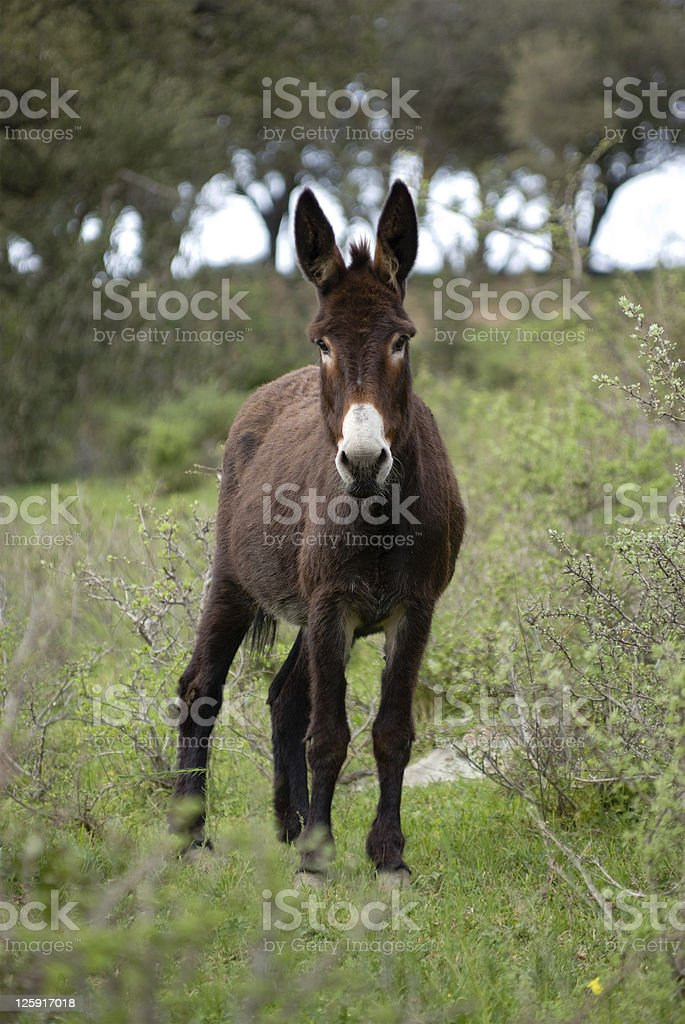 one donkey in the meadow royalty-free stock photo