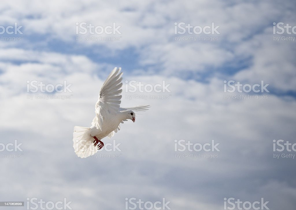One dove in blue sky royalty-free stock photo