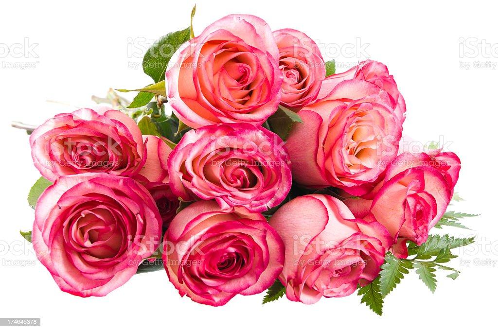 One Dozen Pink Roses royalty-free stock photo