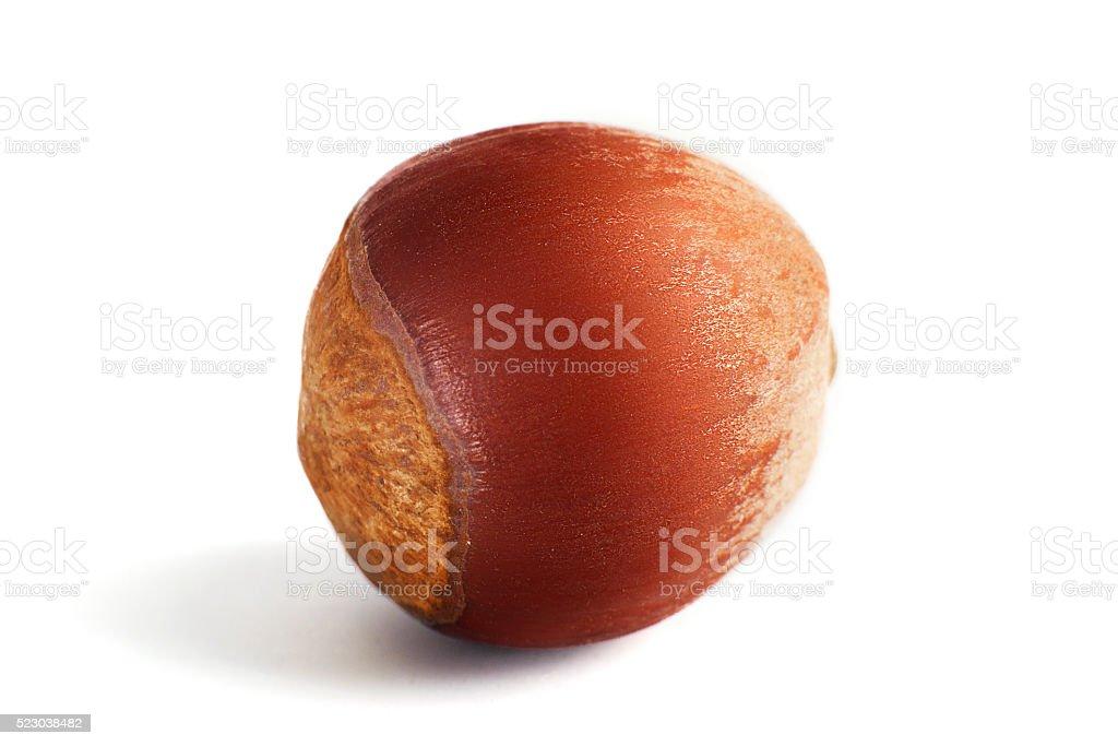 One dried hazelnut in closeup stock photo