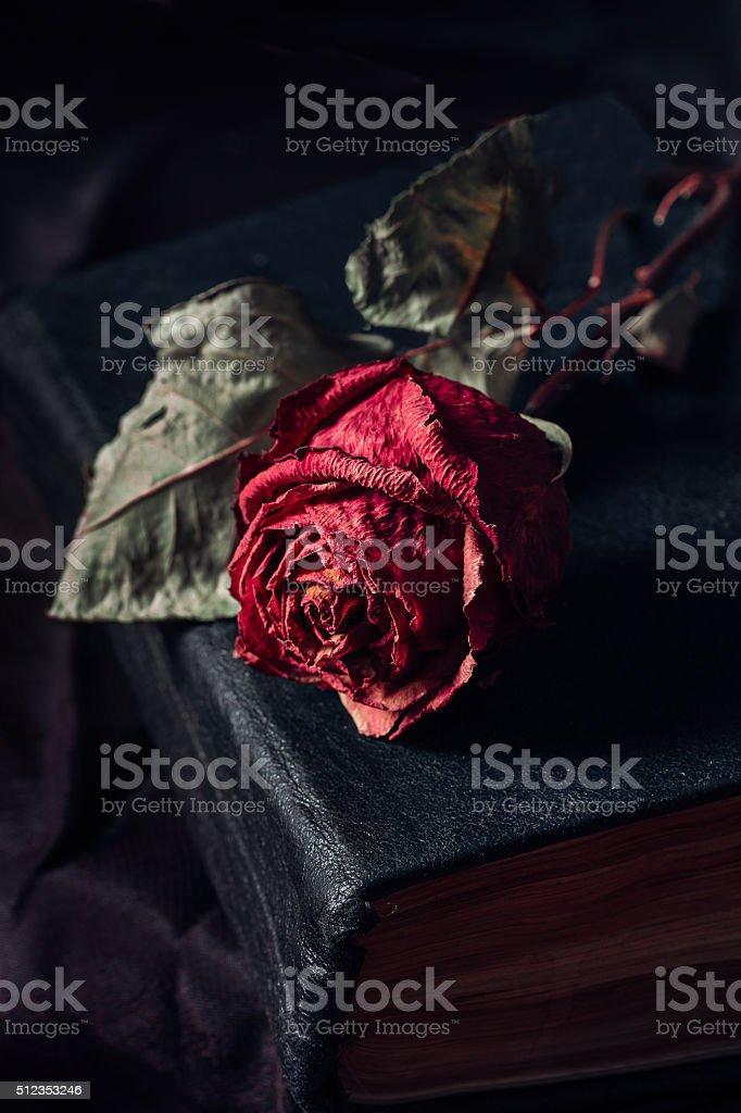 One dry rose stock photo