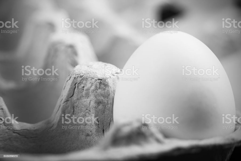 One Egg in the Carton stock photo