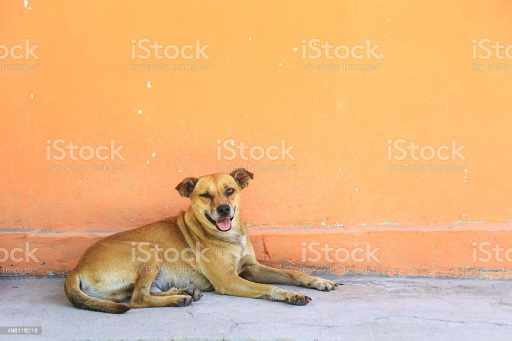 One eye dog stock photo