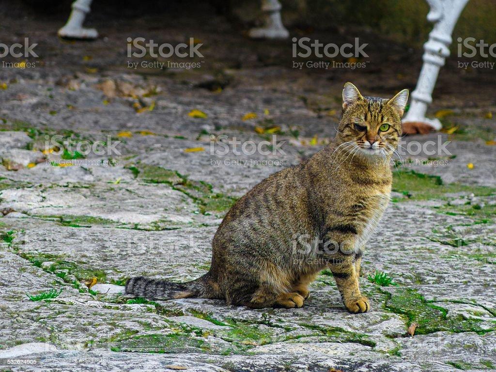 One eyed cat stock photo