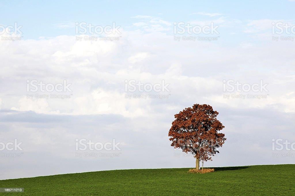 One fall tree on green hillside royalty-free stock photo
