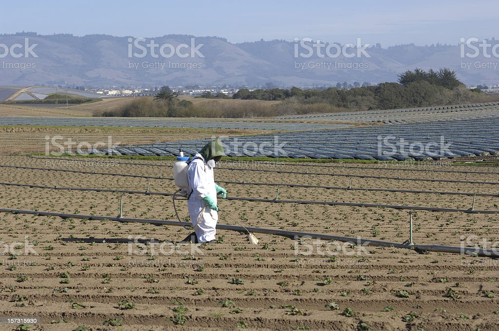 One Farm Worker in Protective Clothing Spraying Plant Seedlings royalty-free stock photo