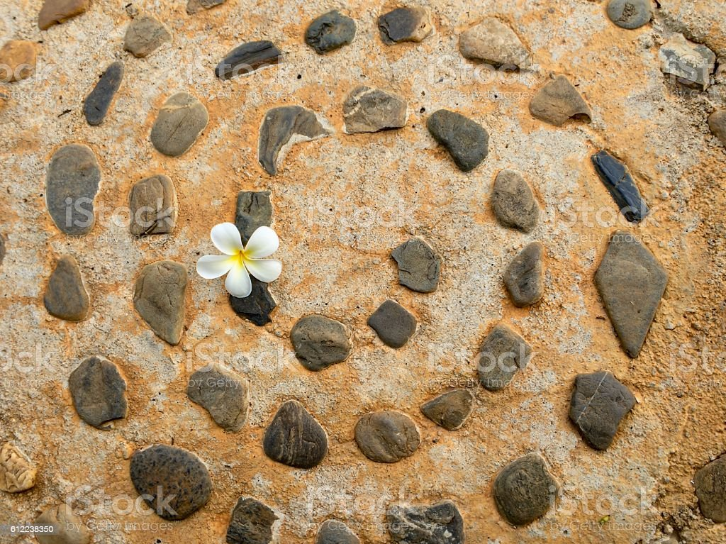 One flower on rock floor royalty-free stock photo
