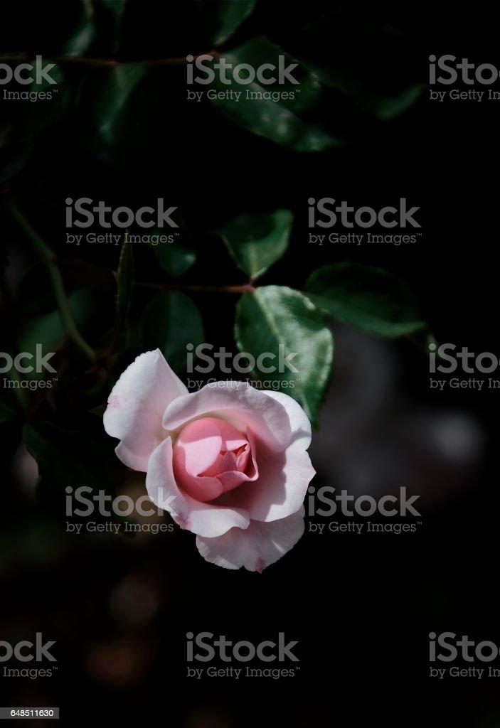 One flower stock photo