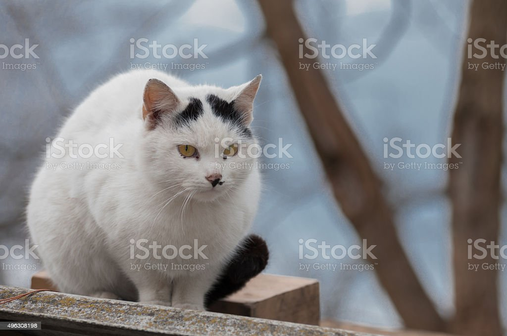 one focused cute white cat stock photo