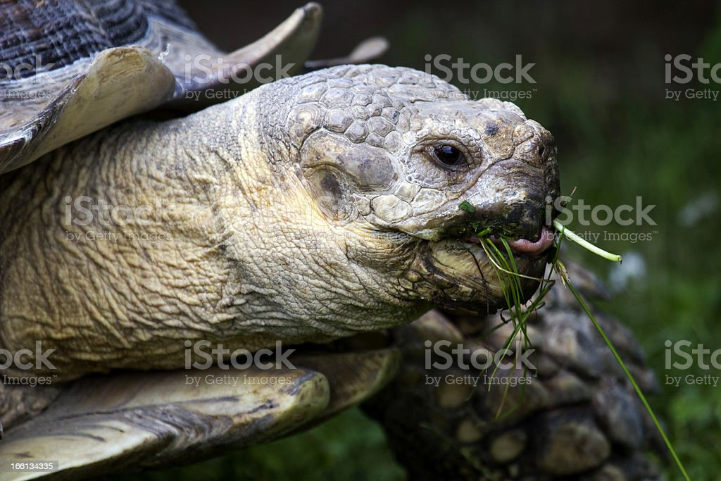 One foot in the salad! royalty-free stock photo