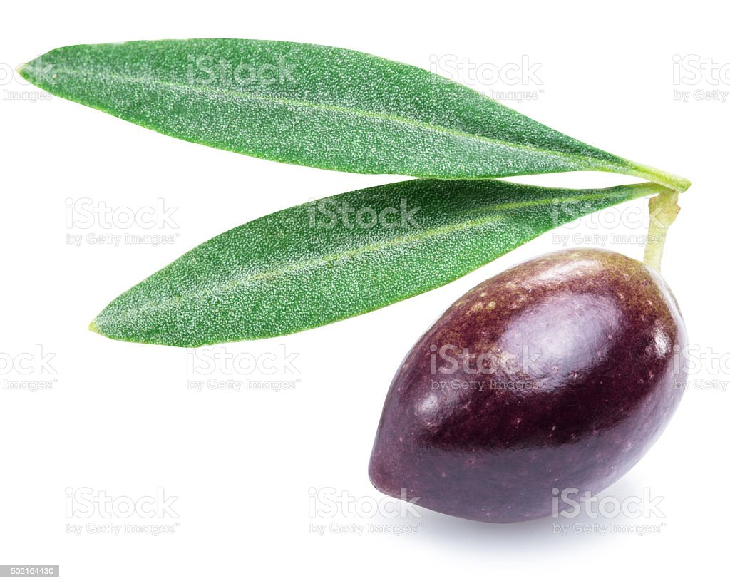 One fresh olive berry with leaves. stock photo