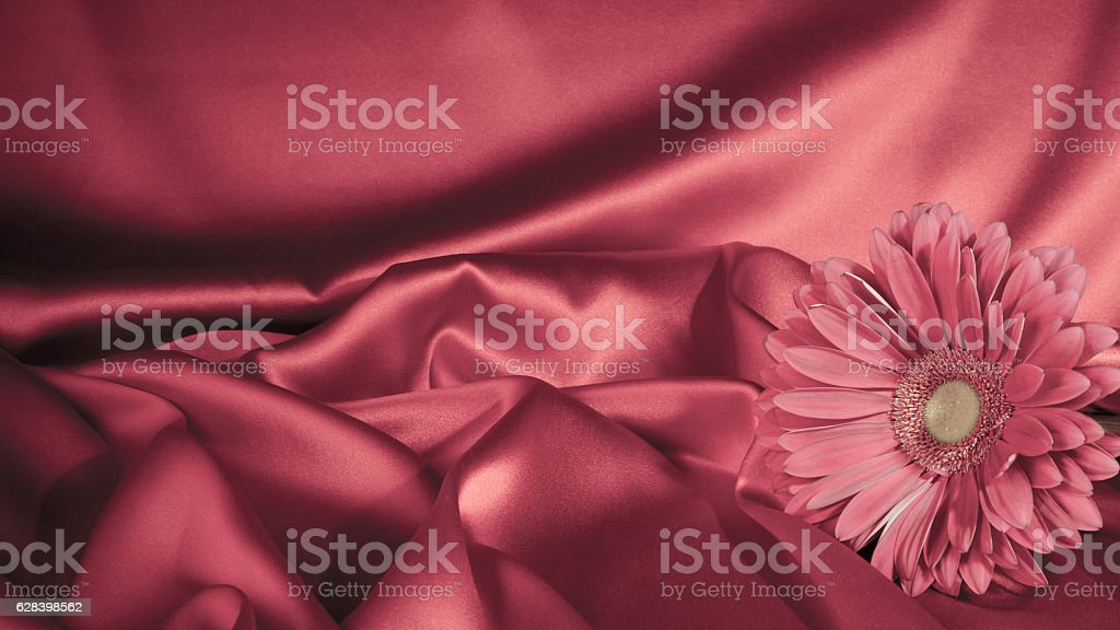 One gerbera flower on a background from fabric stock photo