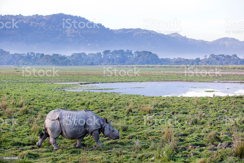 One horned rhinoceros stock photo