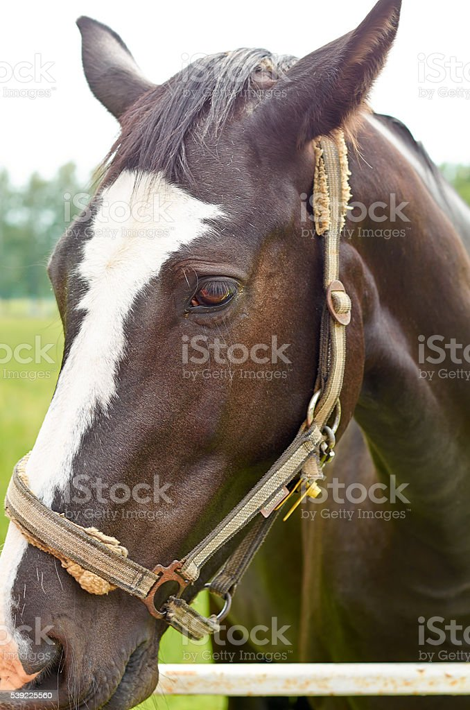 One horse in summer pasture. stock photo