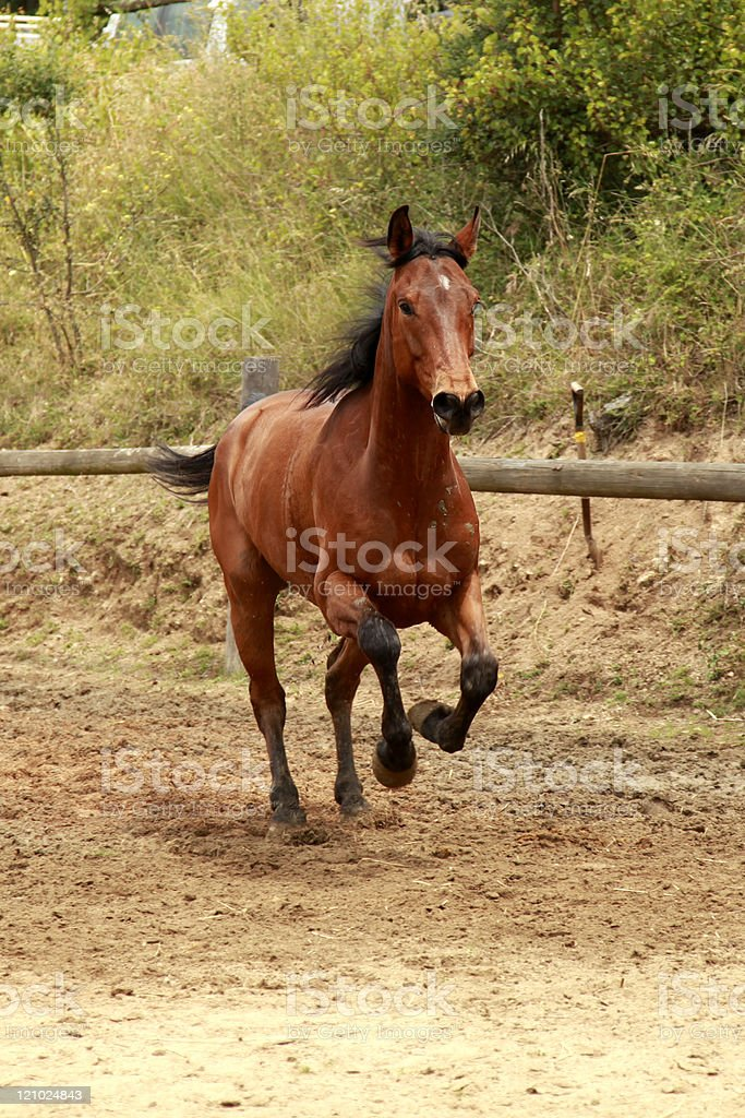 One horse. stock photo