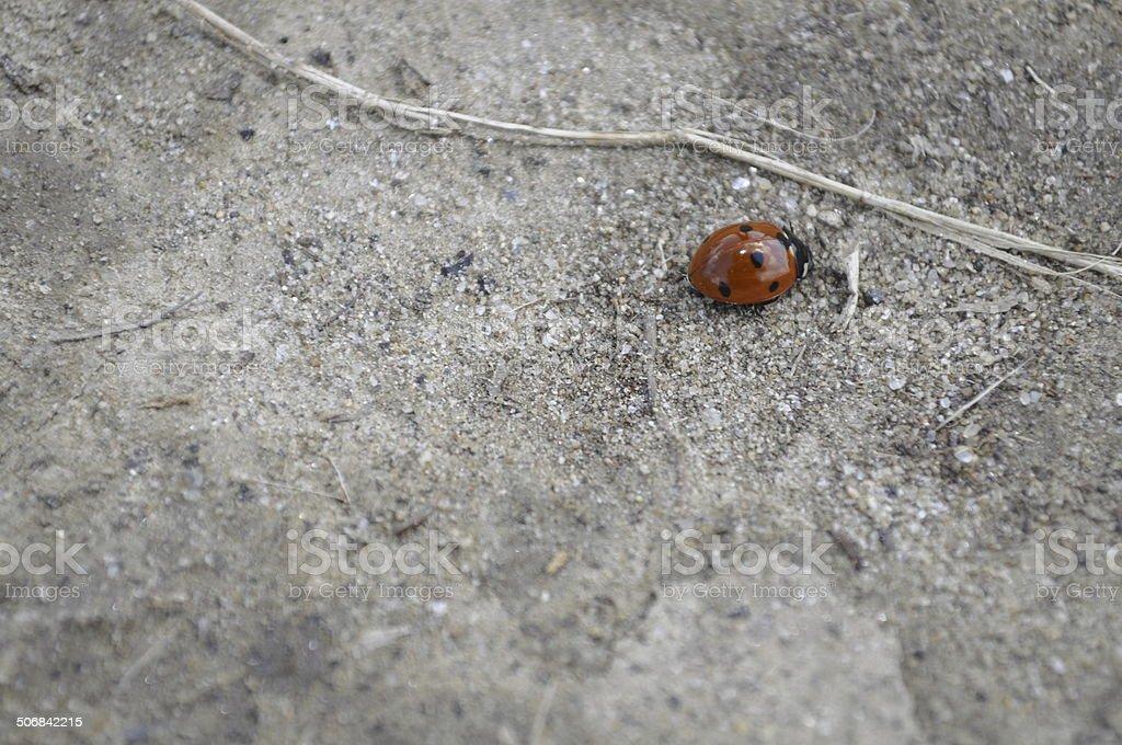 one ladybird on sand royalty-free stock photo