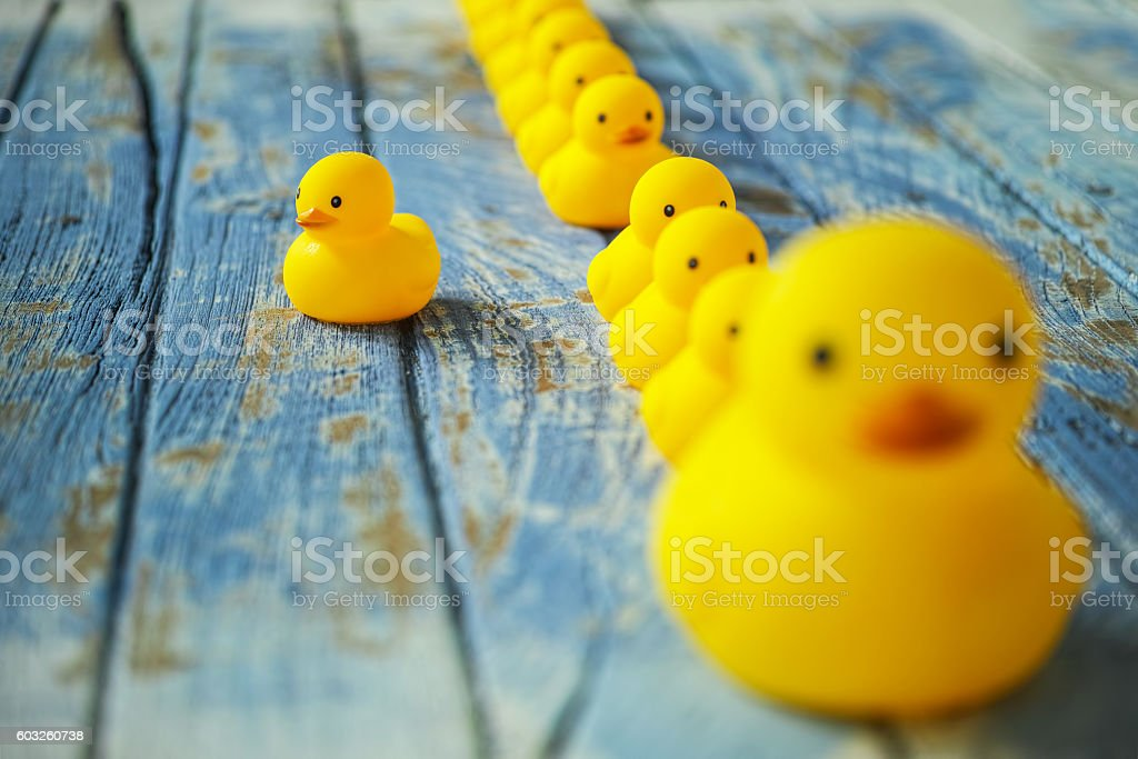 One large rubber duck with many smaller ones following it. stock photo