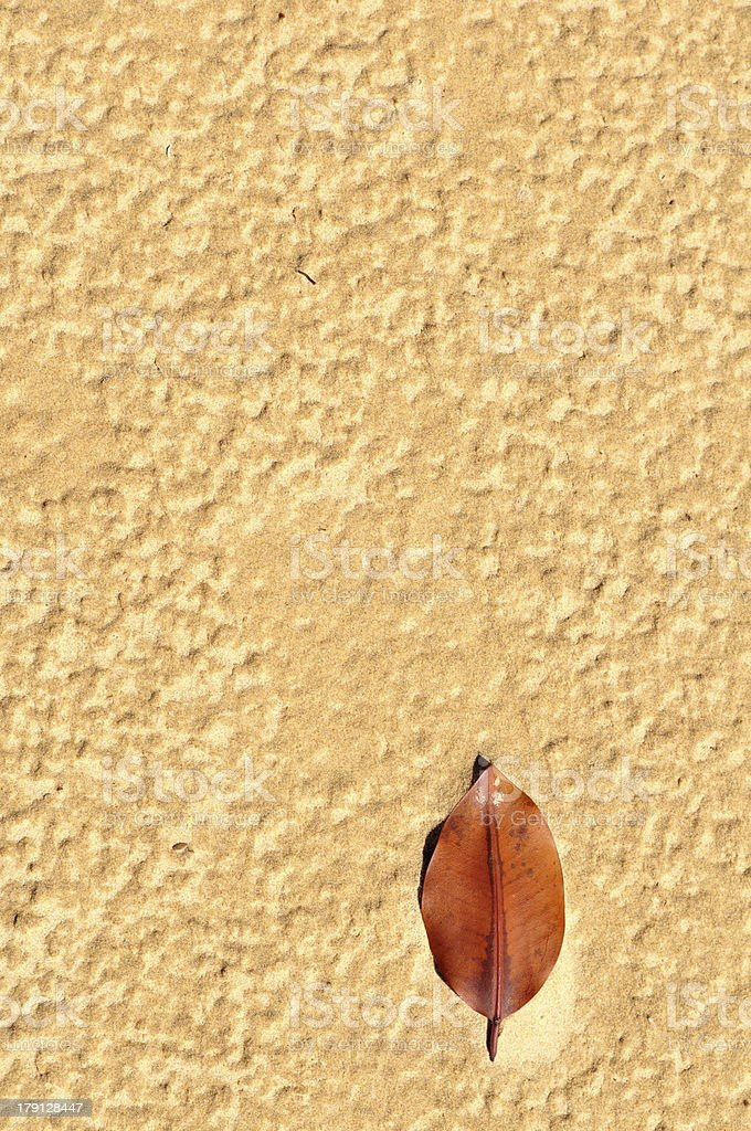 One leaf resting on sand royalty-free stock photo