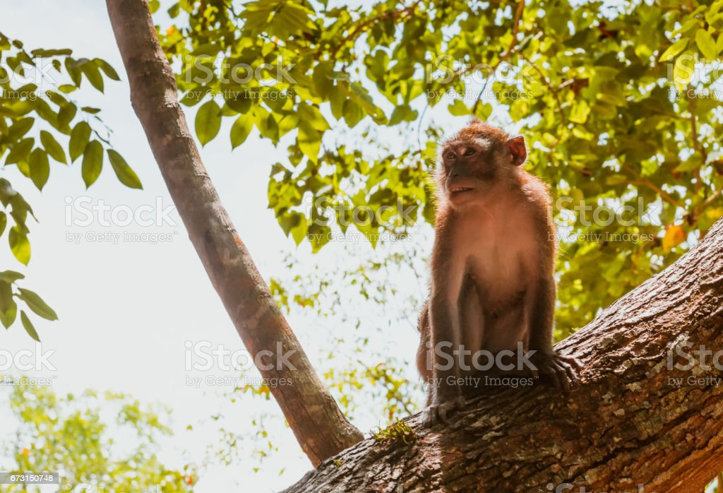One macaque monkey on tree stock photo