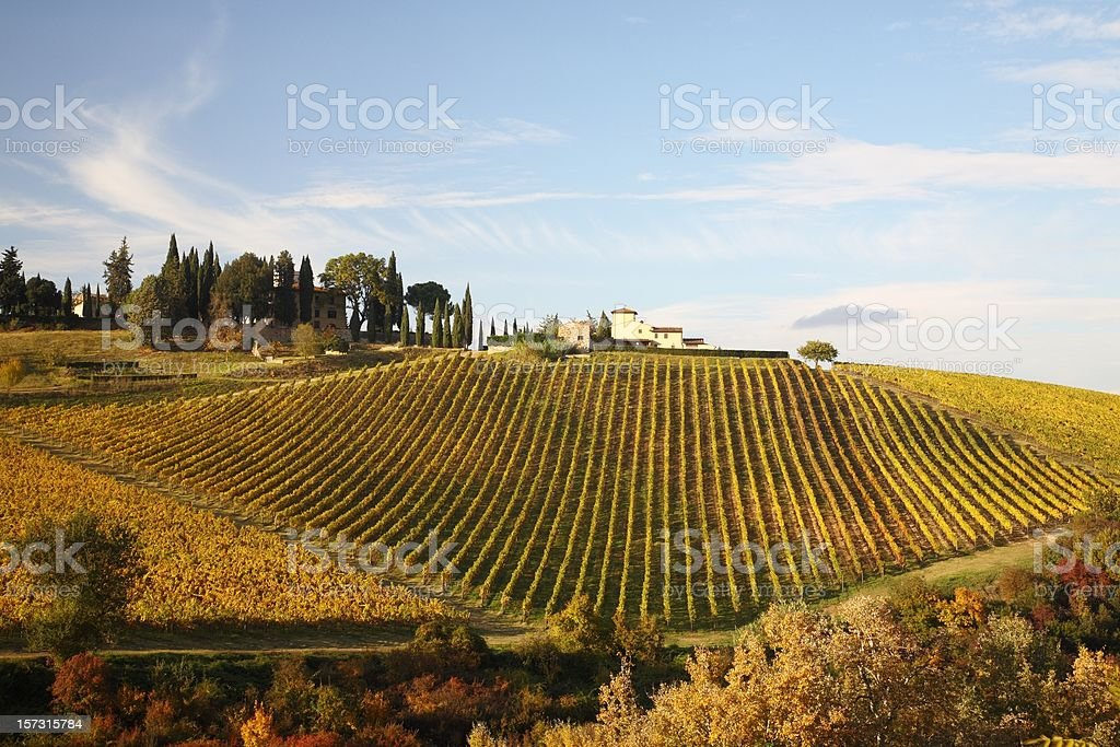 One of impressive Vineyards in Chianti royalty-free stock photo