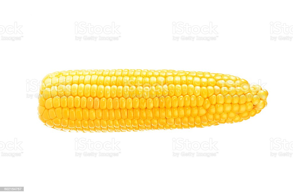 One on ear of corn isolated on a white background stock photo