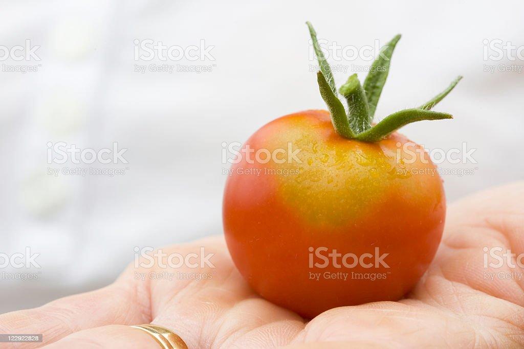 One Organic Tomato stock photo
