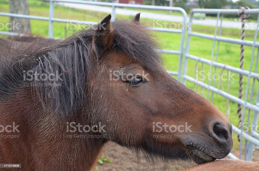 One pony stock photo