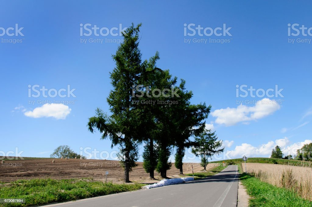 One road. stock photo