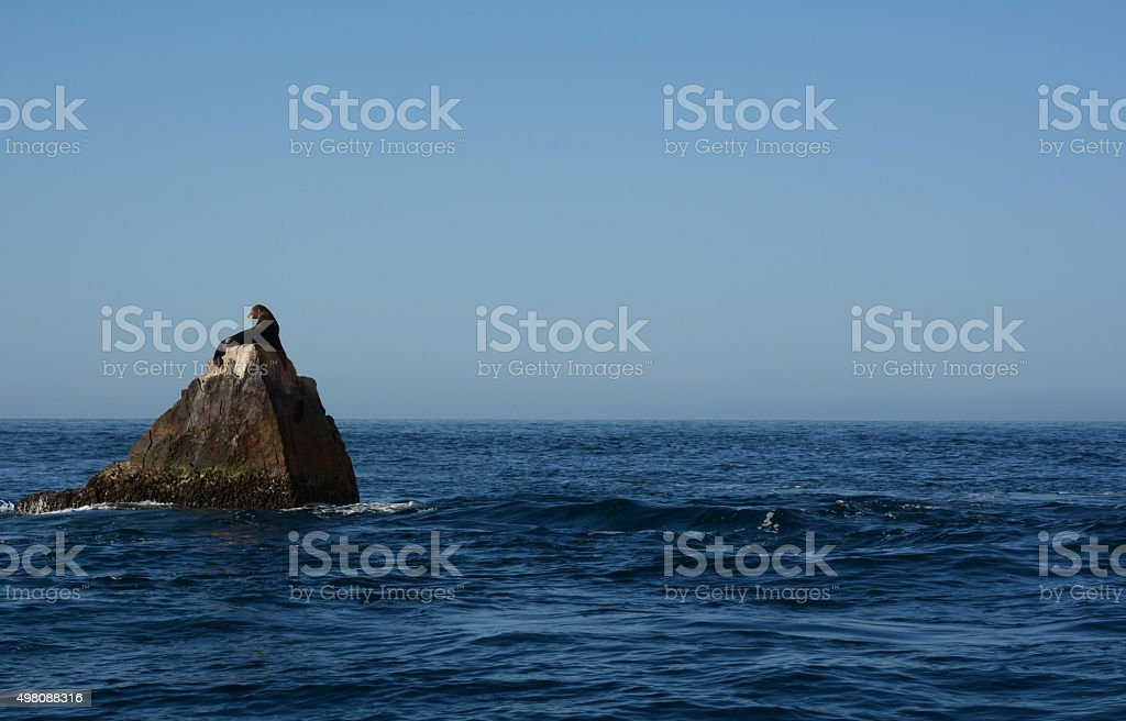 One Sea Lion on a Rock royalty-free stock photo