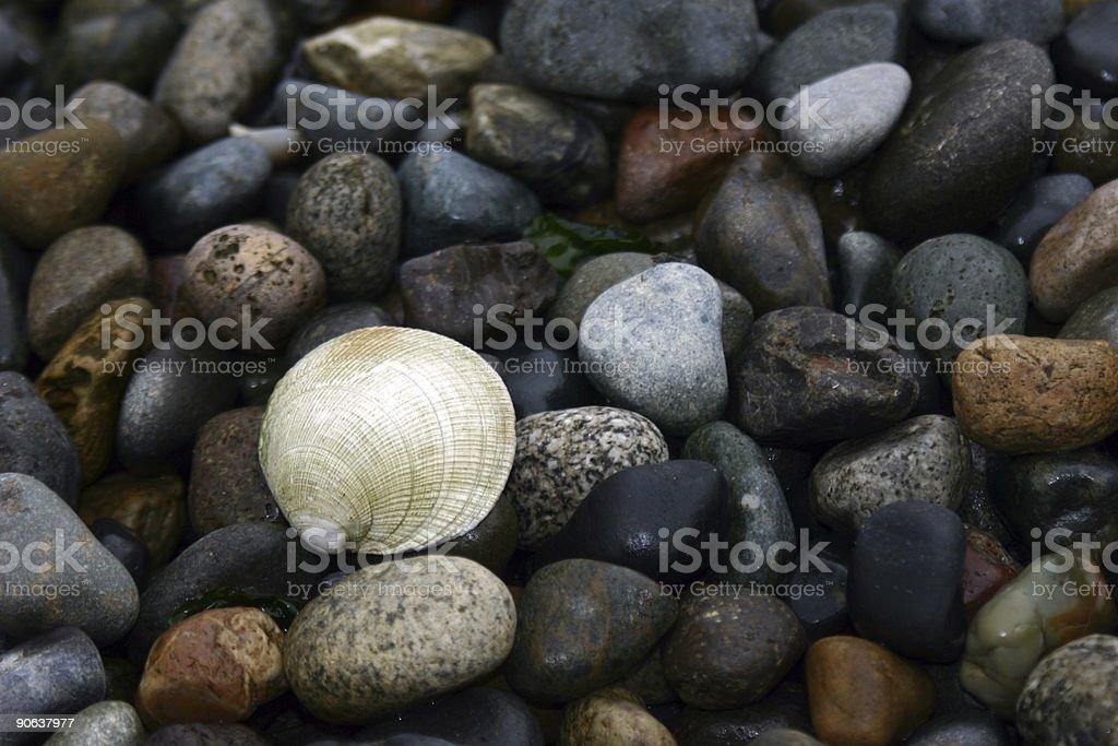 One Sea Shell stock photo