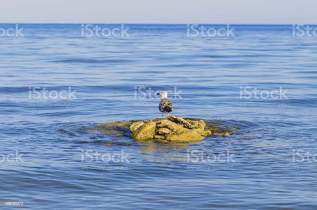 one seagull stending on steady stones in a blue sea royalty-free stock photo