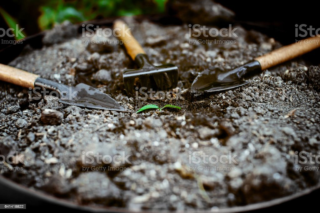 One seedling in the ground, poured around the garden accessories. stock photo