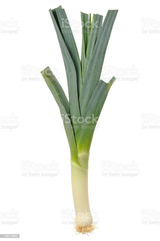 One single leek vegetable on a blank white screen stock photo
