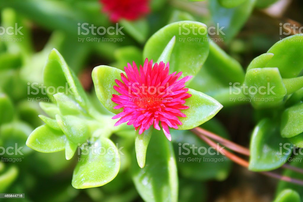 One Single Pink Flower stock photo