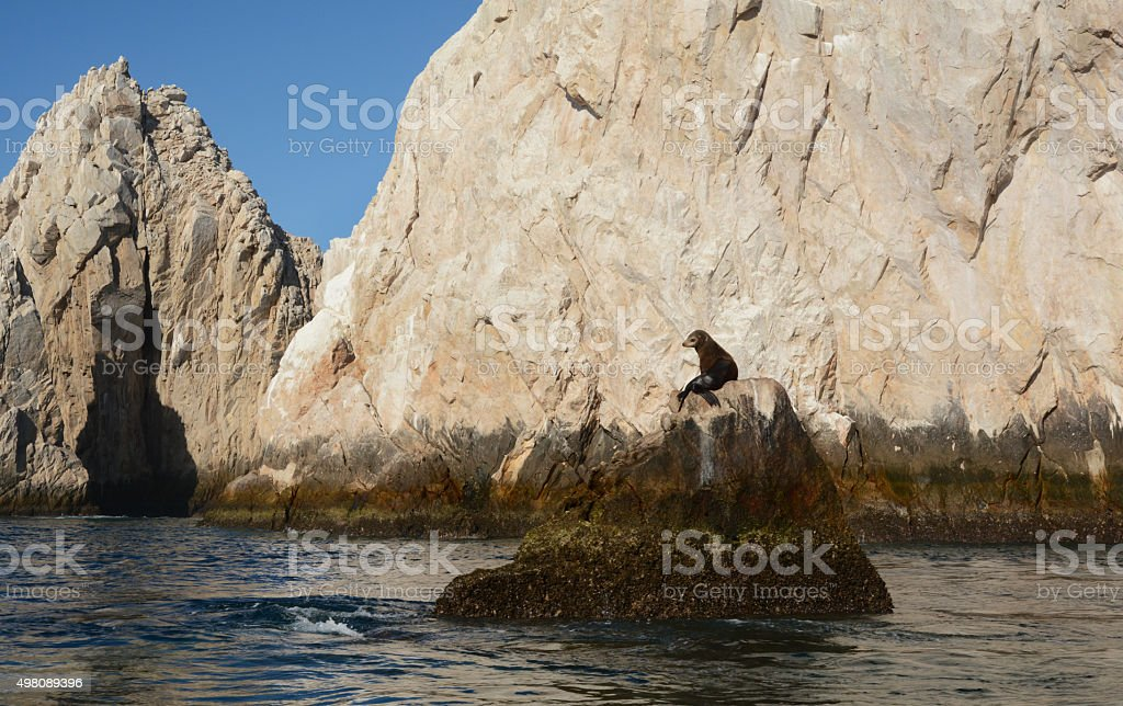 One Single Sea Lion on a Rock royalty-free stock photo