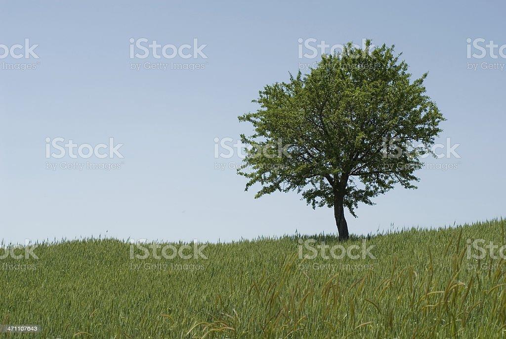 One Single Tree stock photo