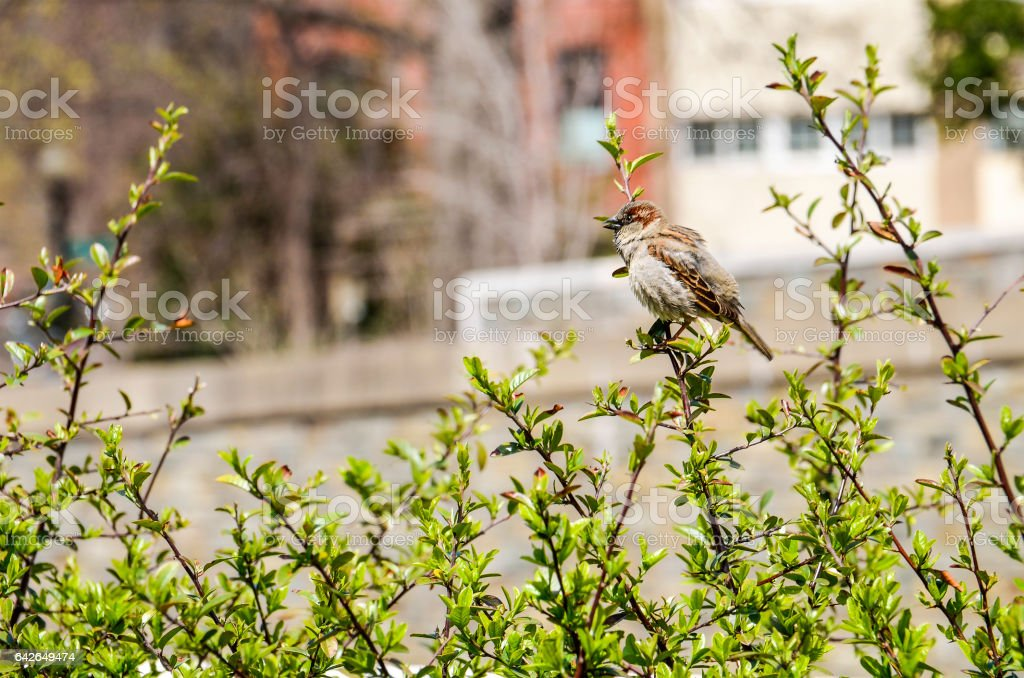 One sparrow perched on a branch in city stock photo