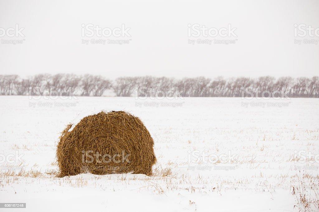 One straw bale stock photo