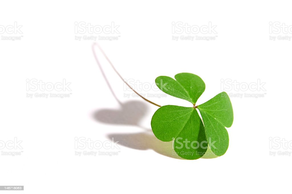 One three-leaf clover with stem on a white surface royalty-free stock photo