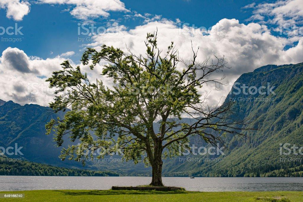 One tree and beautiful lake with mountains. Lake Bohinj, Slovenia. stock photo