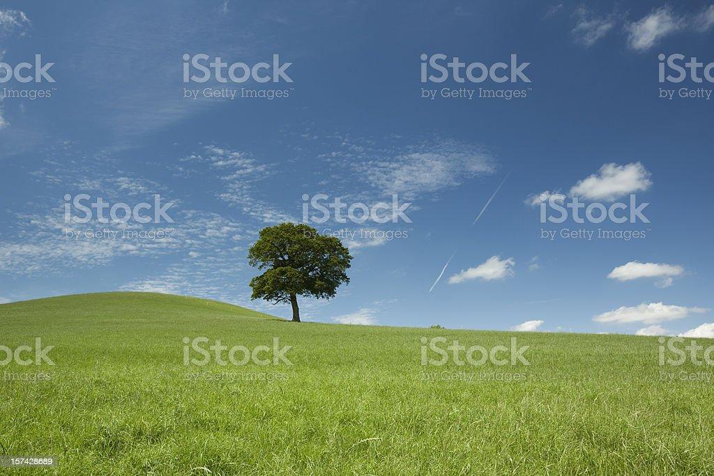 One tree hill royalty-free stock photo