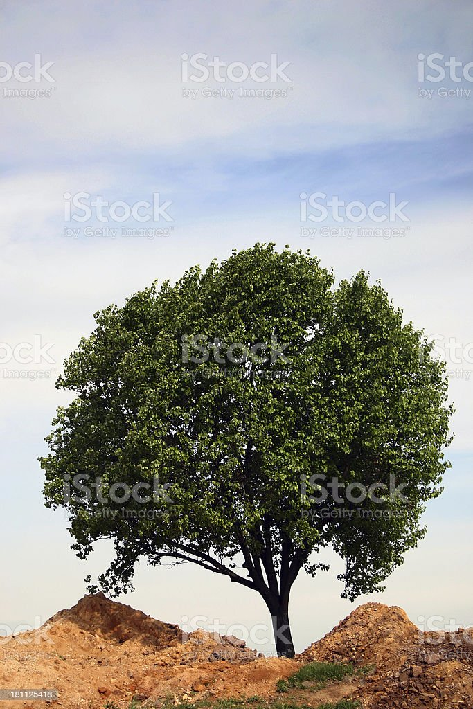 One Tree Hill: Vertical stock photo