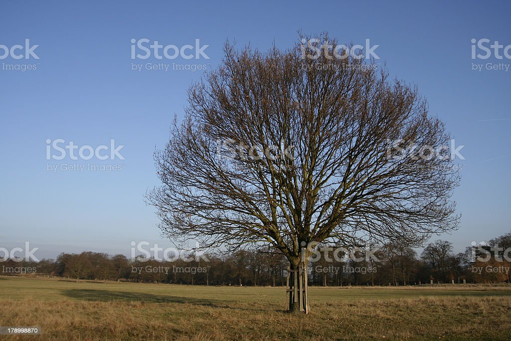 One tree in a park during fall. royalty-free stock photo
