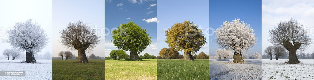 One tree in different seasons stock photo