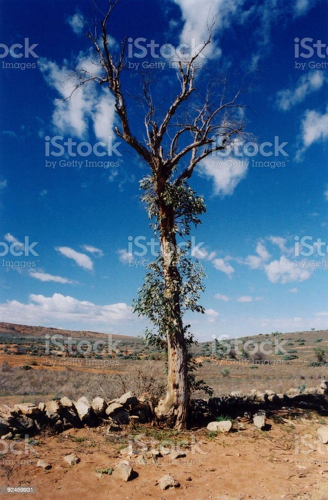 One Tree in Outback royalty-free stock photo