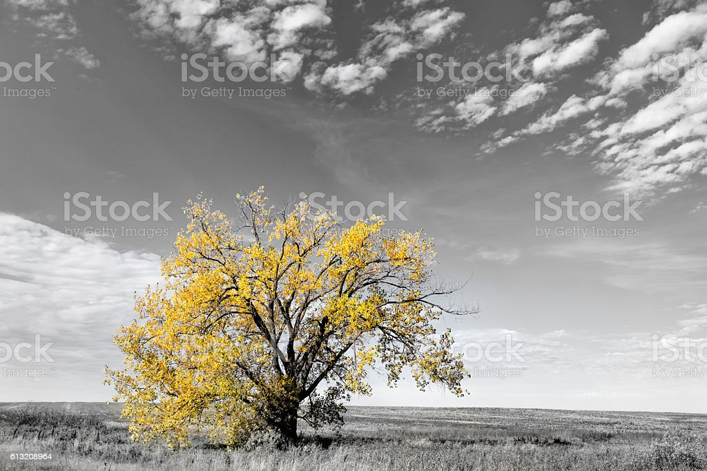 One tree in rural landscape stock photo